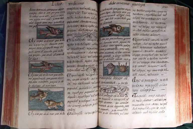 Флорентийский кодекс